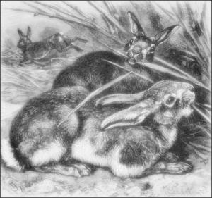 rabbits_2