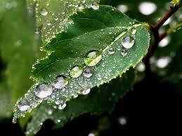 picuri de ploaie